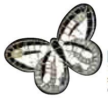 Cosmati Nocturnia Bl Mosaic Butterfly 15X22,6